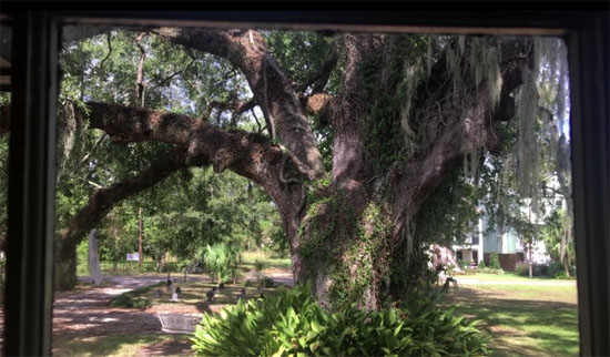 bayou ghost story tree