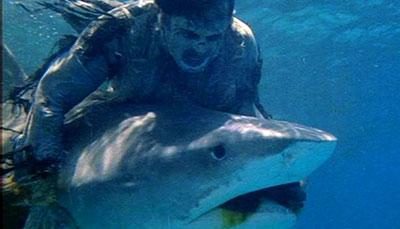 zombie 79 shark