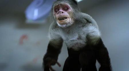 zoombie monkey
