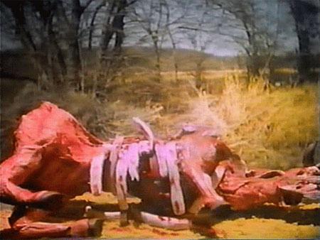 mutilations cattle