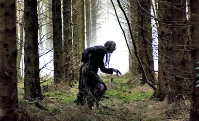 shrooms creep through woods